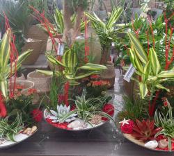 Jardins de plantes