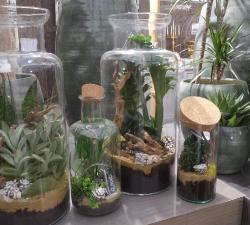Plantes vertes et plantes grasses
